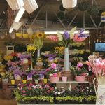 The Country Florist profile image.