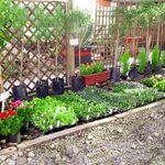 Evander Landscaping & Poles profile image.