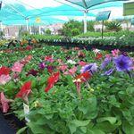 Garden Terrace Nursery Secunda profile image.
