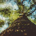 Tree Service Nanaimo profile image.