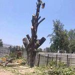 Fem tree felling profile image.