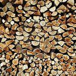 Mundaka Tree Care profile image.