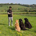 One Dog Training profile image.