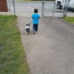 Service Dog Behavior and Control profile image.