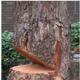 TREE felling PORT elizabeth Budget TREE fellers logo