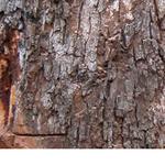 TREE felling PORT elizabeth Budget TREE fellers profile image.