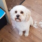 Barking Mad Dog Grooming profile image.