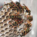 OG pest control profile image.