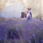 Lily Rose Photography by Jennifer Blair profile image.