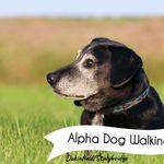 Alpha Dog Walking and Training Services profile image.
