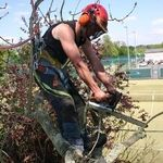 RMS Tree and Garden  Services profile image.