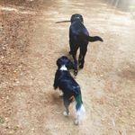 Bert's Bimbles Dog Walking Services profile image.
