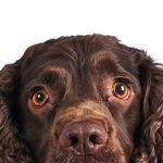 Inkspot Photography profile image.