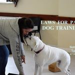Laws for Paws Dog Training profile image.