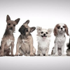 Doggie Daycare York profile image