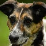 Dogs Den home & Petsitting profile image.