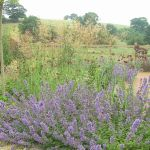 Bennetto Garden Design profile image.