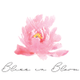 Bliss In Bloom logo
