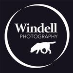 Windell Portraits profile image.