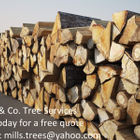 Mills & Co. Tree services  logo