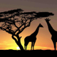 Marlow Safari Supper logo