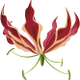 Thrive Horticulture logo