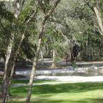 Bark Central Dog Park profile image.
