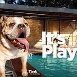 Yuppie Dog profile image.