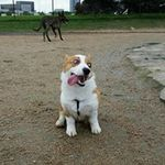 Birdy's Dog Sitting and Walking Services profile image.