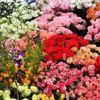 Katherine flower shop profile image