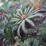 SW Coastal Landscape & Gardening Services profile image.