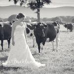 Hannah Buckland Photography profile image.