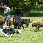 Doggie Day Care profile image.