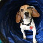 Clever Canine Dog Training profile image.
