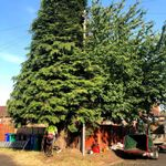 Bridgewater Tree Services profile image.