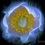 Kirk Fry Photography profile image.