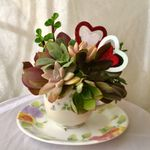Just for fun flowers profile image.