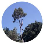 Brown's Tree Service profile image.