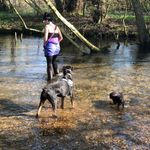 Lolly's and friends, Dog Walking and Animal Care profile image.