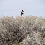 Casey McFarland Photography profile image.
