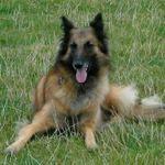 Alpha 1 Canine Communication Ltd profile image.