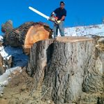 Gilbert's Tree Service, Inc. profile image.
