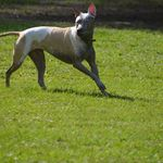 Fleur de Lead Dog Training, LLC profile image.