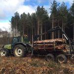 Kent Logs Tree Surgery profile image.