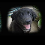 The Pet Hale profile image.