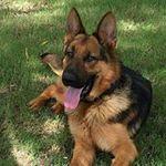 Staley's Dog House & K9 Academy profile image.