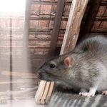 AttiCity inc. attic cleaning bay area profile image.