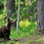Black Bear Design profile image.