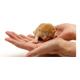 TLC Pet Care Centers logo