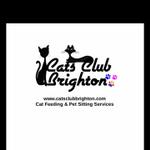 Cats Club Brighton profile image.